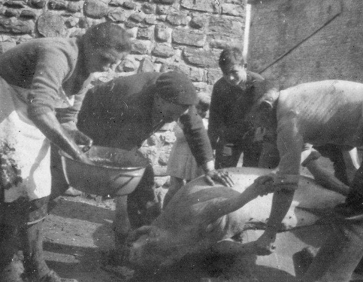 Pèle-porc : On tourne le sang dans la bassine