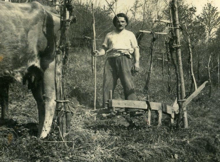 Joseph Laffargue laboure sa vigne