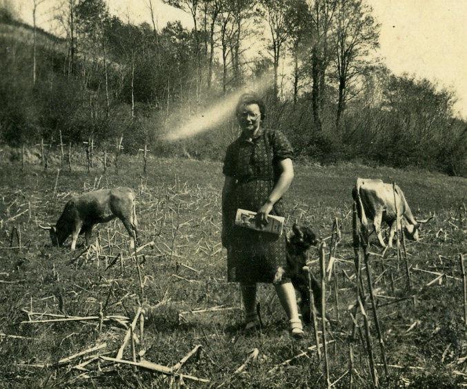 Lucienne Moulié, ses vaches, son chien