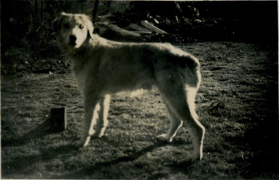 Thomy, le chien fidèle du cordonnier